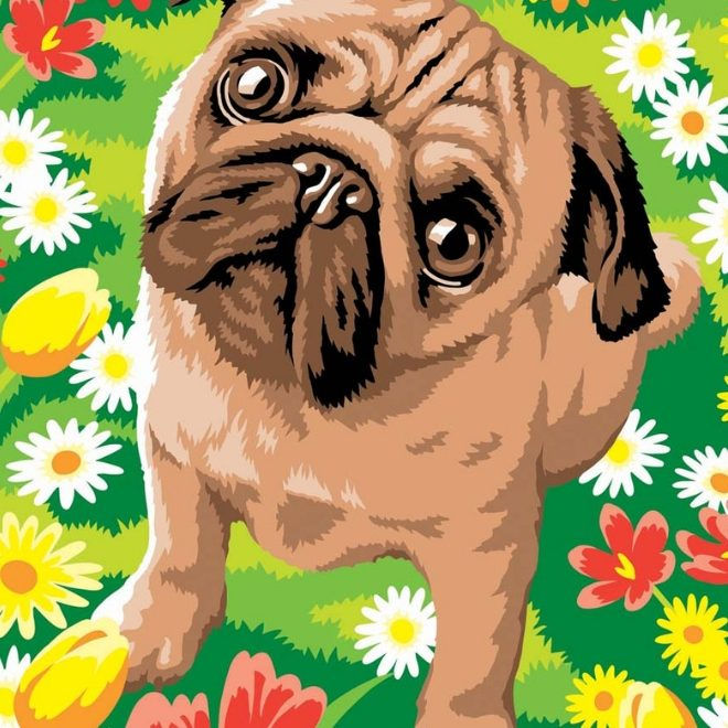 Junior Painting By Numbers Pug