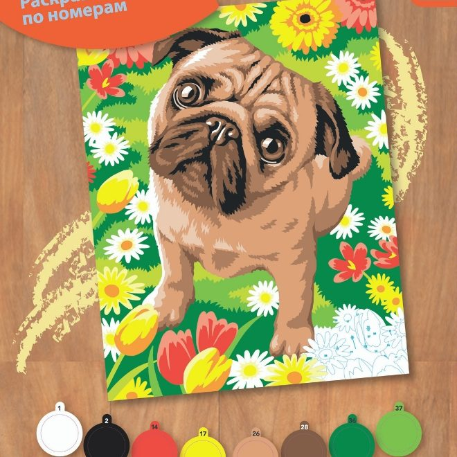 Junior Painting By Numbers Pug Box