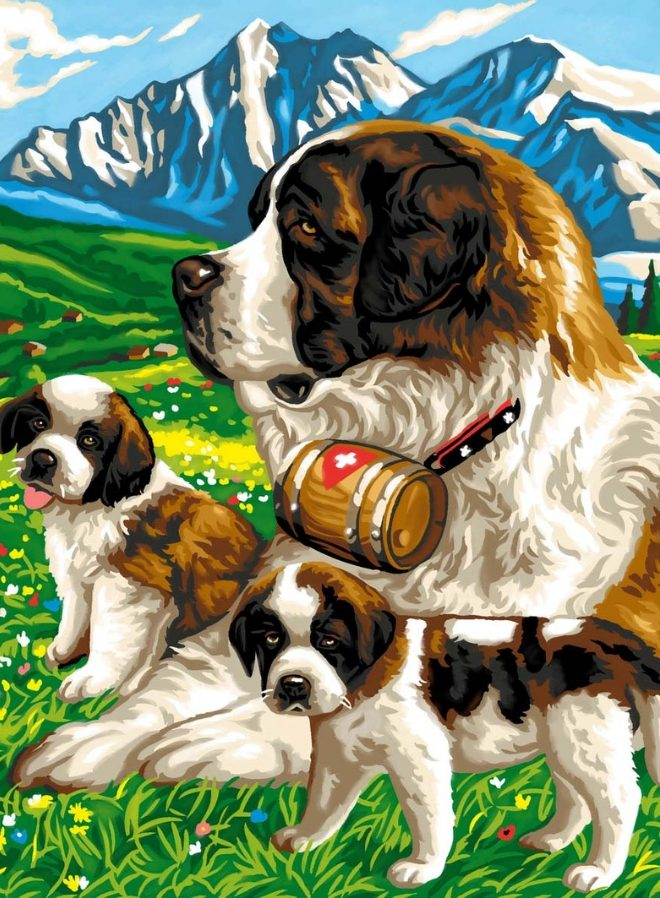 Junior Painting By Numbers St Bernards