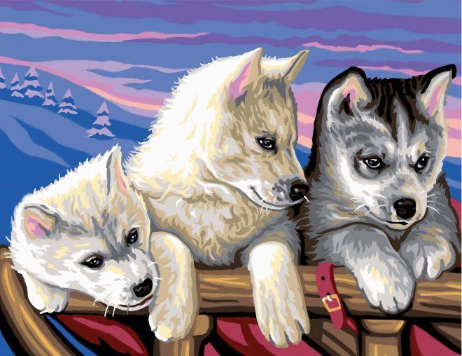 Painting By Numbers Huskies design 1036