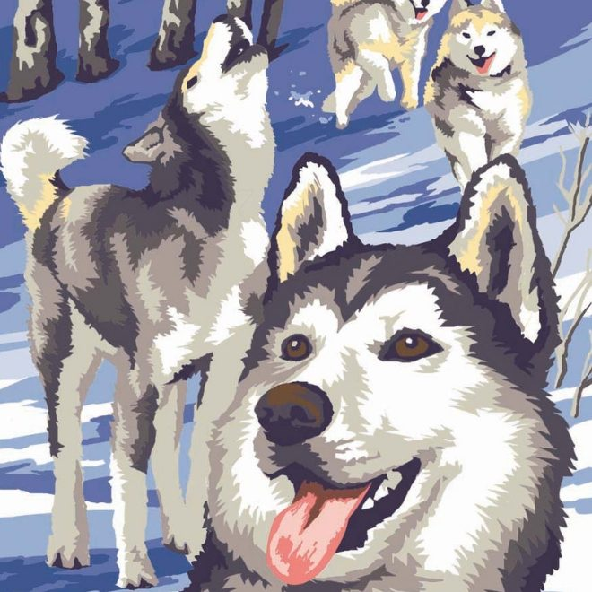 Painting By Numbers Winter Wildlife project featuring Huskies, perfect for adults and children