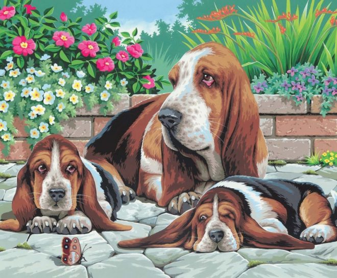 Senior Painting By Numbers Basset Hounds craft project