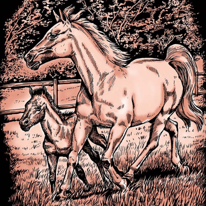 Scratch Art Copper kit includes Horse & Foal picture