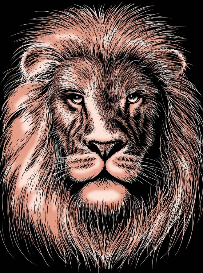 Scratch Art Lion project from the Artfoil Copper range