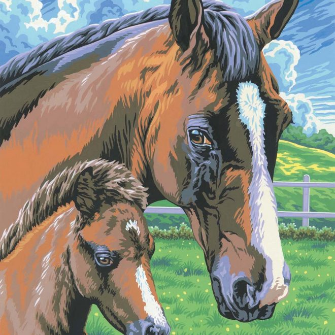 Painting by numbers Horse & Foal picture to create