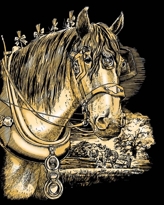 Shire Horse scratch art project