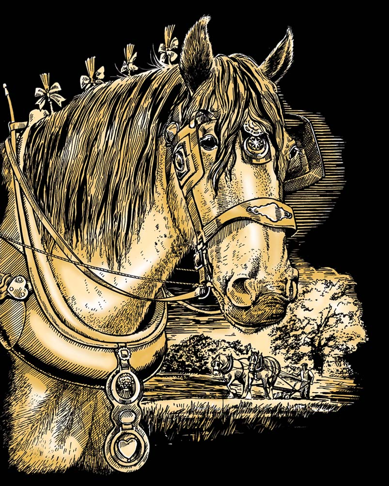Shire Horse scratch art project