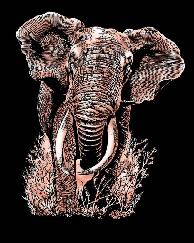 Scratch Art Elephant craft from the Artfoil Copper range