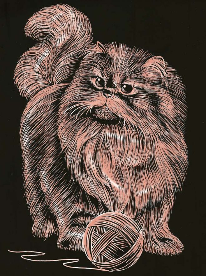 Scratch Art Persian Cat picture from the Artfoil Copper range