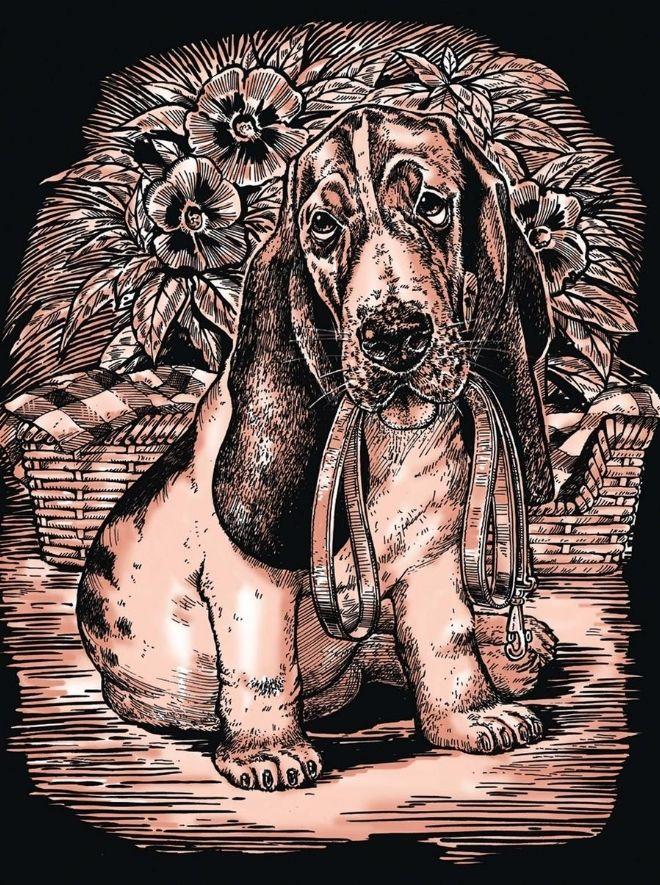 Scratch Art Basset Hound
