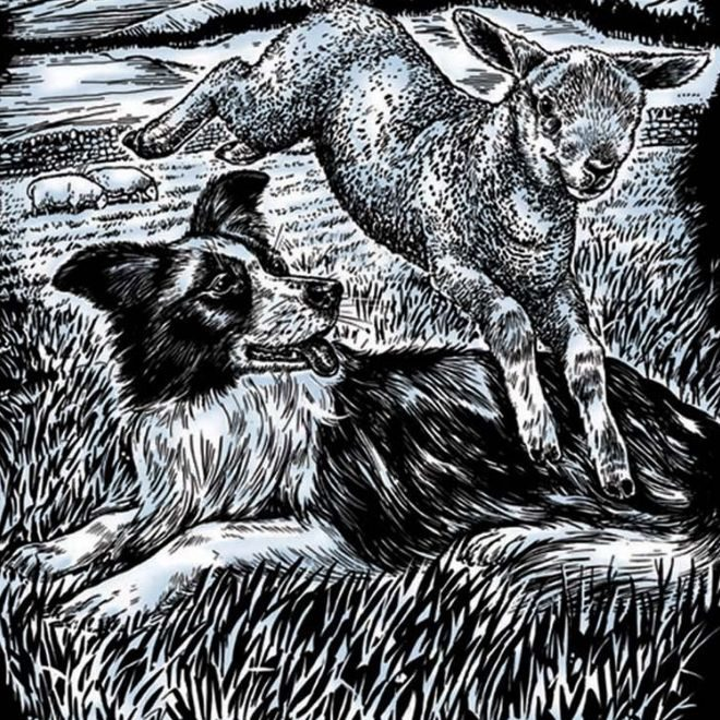 Scratch Art Sheep Dog and Lamb project